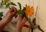 Blumen mit Wachs koservieren