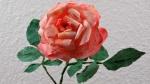 Blumen basteln, romantische Rosenblüten aus Kaffeefilter basteln ❁ Deko Ideen mit Flora-Shop