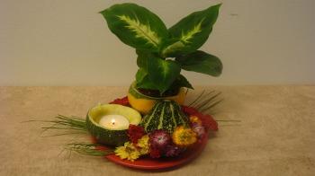 Herbstdekoration mit Zierkürbisse selber machen