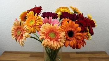 Gerbera pflege, drahten, Blumenstrauß binden. Video Anleitung