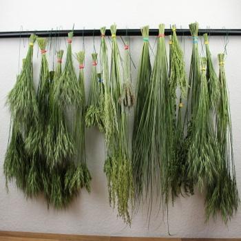 Der Blumentrend 2020 in der Floristik ist die Nachhaltigkeit