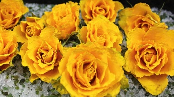 Mein Test mit Rosen Blumen trocknen mit Kristalle ❁ Blumen konservieren